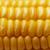 corn background stock photo © nneirda