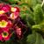 падение · воды · красный · лепесток · цветок - Сток-фото © nneirda