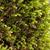 friss · moha · makró · zöld · természet · öreg - stock fotó © nneirda
