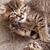 aranyos · kicsi · macskák · közelkép · fotó · mosoly - stock fotó © Nneirda