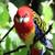 tropische · Geel · papegaai · groene · vleugels · vergadering - stockfoto © nneirda