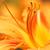 exotisch · oranje · bloesem · bloem · botanisch · tuinen - stockfoto © nneirda