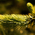 árvore · folhas · horrível · seca - foto stock © nneirda