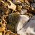pequeno · rocha · jardim · rochas · alpino · plantas - foto stock © nneirda