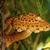 ツリー · 菌 · 森林 · 自然 · 美 · 森 - ストックフォト © nneirda