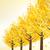 jesienią · złota · pozostawia · kopia · przestrzeń · tekst · drzewo - zdjęcia stock © norwayblue