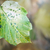 jesienią · widoku · liści · streszczenie · tle - zdjęcia stock © Novic