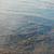 海藻 · 湖 · 自然 · 草 · 自然 · 海 - ストックフォト © novic