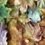 jesienią · widoku · klon · dąb - zdjęcia stock © Novic