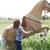 woman training horse to rear up stock photo © novic