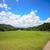 balle · de · golf · gazon · pavillon · ciel · bleu · ciel · arbre - photo stock © nuiiko