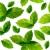 зеленый · чай · листьев · вектора · реалистичный · иллюстрация · изолированный - Сток-фото © nurrka