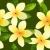 seamless pattern with frangiapani flowers stock photo © nurrka