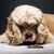 kutya · szag · étel · fehér · fapadló · fiatal - stock fotó © O_Lypa