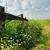 edad · carretera · hierba · verde · campo · tempestuoso · cielo - foto stock © o_lypa