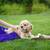 クローズアップ · 肖像 · 犬 · ハンガリー語 · 紫色 - ストックフォト © o_lypa