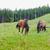kettő · lovak · testtartás · közelkép · kilátás · fű - stock fotó © o_lypa
