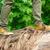 sapatos · masculino · verde · amarelo · mulher · folha - foto stock © o_lypa