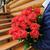 groot · rozen · boeket · witte · auto · steeg - stockfoto © o_lypa