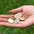 hebzucht · handen · geld · menselijke · hand · valuta - stockfoto © ocskaymark