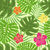 セット · ハイビスカス · エキゾチック · 植物学 · 葉 - ストックフォト © odina222