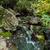 écouter · pierres · couvert · plantes · laisse - photo stock © oei1