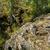 каменные · холмы · пейзаж · дерево · трава · природы - Сток-фото © oei1