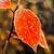 красочный · растений · покрытый · мороз · фоны - Сток-фото © oei1