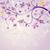 tavasz · klasszikus · virág · kör · kártya · szín - stock fotó © olgadrozd