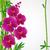 tropische · grens · ontwerp · kleurrijk · trillend · bloemen - stockfoto © olgayakovenko