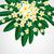 цветы · белый · многие · цветами · фон · лет - Сток-фото © olgayakovenko