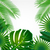 suluboya · tropikal · yaprakları · yalıtılmış · beyaz · palmiye · yaprağı - stok fotoğraf © olgayakovenko