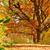 jesienią · krajobraz · ścieżka · szlak · grupy · kolorowy - zdjęcia stock © olira