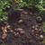 fresh harvesting potatoes stock photo © olira