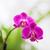 orquídeas · jardim · botânico · Washington · natureza · folha · jardim - foto stock © olira