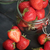 morango · coração · valentine · amor · criador · natureza · morta - foto stock © olira