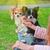 correa · retrato · cute · blanco - foto stock © olira