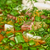hideg · leves · zöldségek · hús · tányér · nyár - stock fotó © olira
