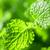 органический · чай · текстуры · кофеин · свободный · лист - Сток-фото © olira