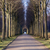 Tree alley in a park stock photo © oliverfoerstner
