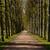 francuski · ogród · aleja · drzew - zdjęcia stock © oliverfoerstner