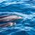 dauphins · mère · bébé · dauphins · natation - photo stock © oliverfoerstner