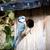 Blue tit at a birdhouse stock photo © oliverfoerstner