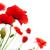 sok · piros · pipacsok · mező · tavasz · virág - stock fotó © olivier_le_moal