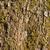 yosun · havlama · ağaç · orman · soyut · dizayn - stok fotoğraf © ondrej83