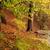 színek · ködös · ősz · zuhan · levelek · őszi · idény - stock fotó © ondrej83