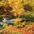 typisch · najaar · scène · gekleurd · bladeren · rivier - stockfoto © ondrej83