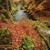 осень · лес · потока · реке · листьев - Сток-фото © ondrej83