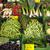 zöldség · piac · friss · zöldségek · zöld · friss · hagyma - stock fotó © oorka