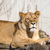 vad · Afrika · Kenya · tavasz · macska · szépség - stock fotó © oorka